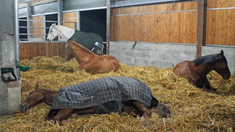 Entspannte Pferde in den Gruppenausläufen
