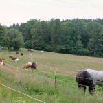 Im Sommer genießen die Pferde 24 Stunden am Tag das angrenzende Weideland.