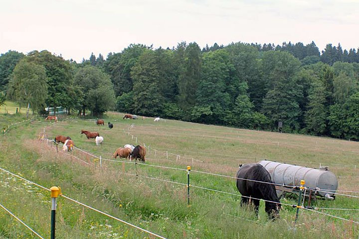 Im Sommer genießen die Pferde das Weideland.