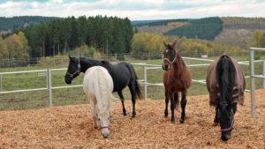 Alles was Pferde brauchen: viel Bewegung, frische Luft, Zugang zu leckerem Futter und Sozialkontakte.