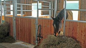 Boxenhaltung mit großzügigen Paddocks gibt es auch auf dem Hof-Silberberg: für manche Pferde eine gute Alternative.