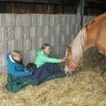 Einfach Zeit verbringen mit den Pferden.