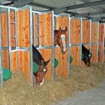 Durch ausreichend viele Fressplätze können alle Pferde gleichzeitig und in Ruhe fressen.