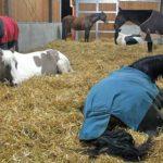 In der Liegehalle ist für alle zum Ausruhen und Schlafen genügend Platz.