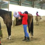 Beim Voltigieren werden Turnübungen auf dem Pferd gemacht.