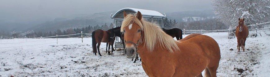 Ponyferien in den Winterferien