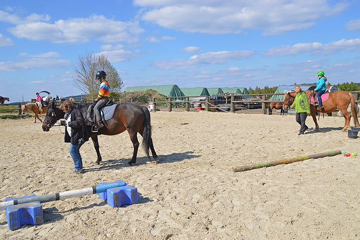 Mit mehreren Pferden gleichzeitig.