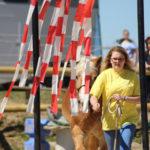 Mut und Vertrauen bewiesen die Pferde im Gelassenheitsparcours.