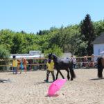 Auch an Regenschirme werden Pferde behutsam gewöhnt.