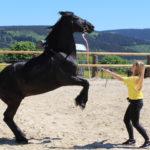 Zirkuslektionen mit beeindruckendem Steigen des Pferdes.