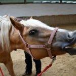Unsere Ponys sind alle lieb und werden gerne gestreichelt.