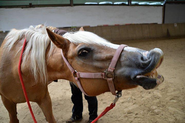 Unsere Ponys sind alle lieb und manchmal lustig